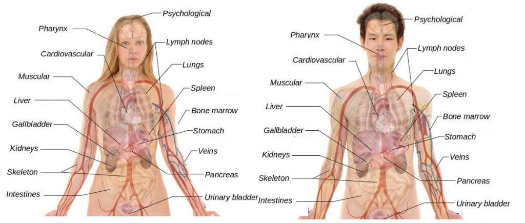 Mann - Frau - Biologie - Körper - Gender-Diskurs